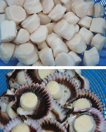 Grown on a scallop farm in Peru, in the cleanest waters of the Pacific Ocean